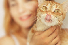 Crazy cat licks nose Stock Photos