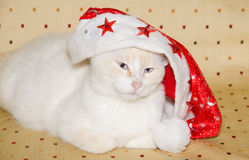 Crazy cat with santa claus hat Stock Photo