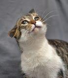 Crazy cat Stock Photo