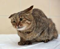 Crazy cat Stock Images