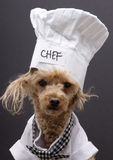 Crazy Chef Royalty Free Stock Photos