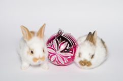 Crazy christmas bunnies Stock Images