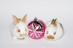 Crazy christmas bunnies Stock Images