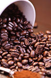 Crazy Coffee Bean Series 3 Royalty Free Stock Photo