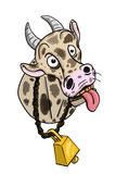 Crazy Cow Stock Images