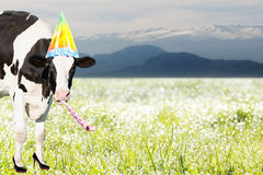 Crazy cow in front of tiroler mountains Royalty Free Stock Image