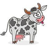 Crazy cow. Stock Photo