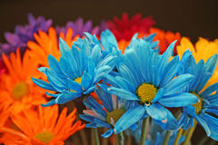 Crazy Daises 2. Colorful Daisy Bouquet Stock Photo