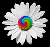Crazy daisy stock photography