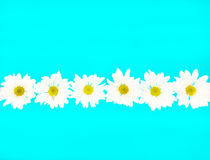 Crazy Daisy Chain. Stylized daisies on a neon blue background stock photos