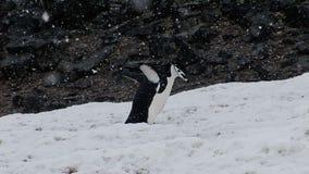 Crazy Dancing Penguin stock video
