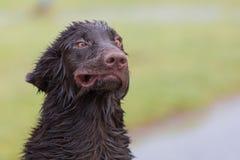 Crazy Dog Royalty Free Stock Photos