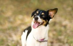 Crazy Dog Royalty Free Stock Photography