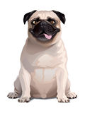Crazy Dog. Pug Stock Photography