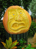 Crazy Face Pumpkin. Large crazy face pumpkin is ready for Halloween Royalty Free Stock Image