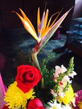 Crazy flower. Unique colorful original Mexico farmers Stock Image