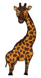 Crazy giraffe Royalty Free Stock Photography