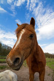 Crazy horse portrait Stock Photos