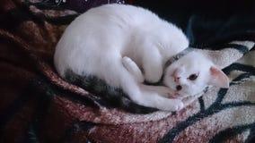 Crazy kitten Royalty Free Stock Photos