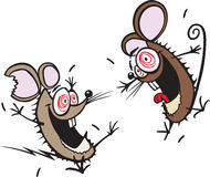 Crazy mice Stock Images