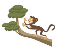Crazy monkey. A monkey on top of the tree branch Royalty Free Stock Image