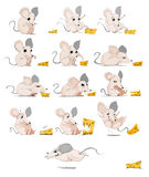 Crazy Mouse eating cheese cartoon Stock Photography
