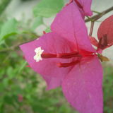 crazy nature loving flower garden Stock Photos