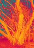 Crazy Orange Tree Art Royalty Free Stock Images