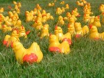 Crazy Plastic Chicks 2. Funny plastic chicks photo shoot taken last summer Stock Image
