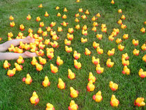 Crazy Plastic Chicks 3 Royalty Free Stock Image
