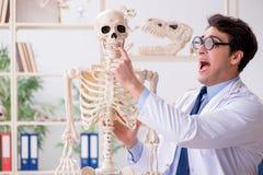 The crazy professor studying human skeleton. Crazy professor studying human skeleton stock image