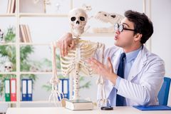 The crazy professor studying human skeleton. Crazy professor studying human skeleton stock photos