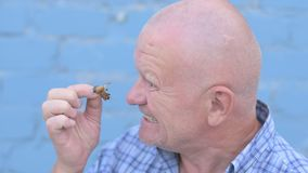Crazy Russian elderly man with a shaved head is holding an insect Gryllotalpidae and eats pest insect stock footage