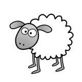 Crazy sheep Stock Photography