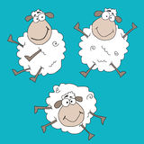 Crazy sheeps stock image