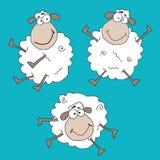 Crazy sheeps Stock Image
