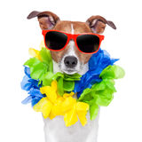 Crazy sill dog Royalty Free Stock Photos