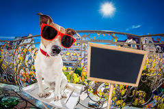 Crazy silly dumb dog fisheye look Royalty Free Stock Photography