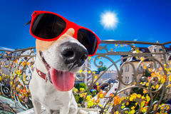 Crazy silly dumb dog fisheye look Stock Images