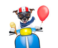 Crazy speed dog Stock Photography