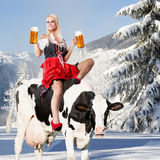 Crazy tiroler or oktoberfest woman. Crazy oktoberfest or tiroler creation with a very beautiful woman who is sitting on a cow and serving beer and in the Stock Photography