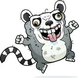 Crazy Ugly Lemur Stock Image