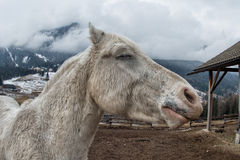 Crazy white horse Royalty Free Stock Photos