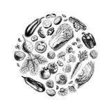 Círculo del vector de verduras Foto de archivo libre de regalías