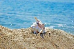 Creación del verano en la playa con las criaturas naturales del mar imagen de archivo libre de regalías