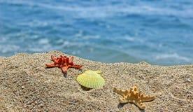 Creación del verano en la playa con las criaturas naturales del mar imagen de archivo