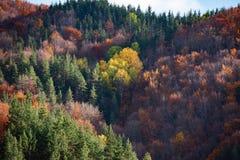 Creaciones del otoño Imagen de archivo
