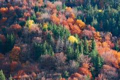 Creaciones del otoño Imágenes de archivo libres de regalías