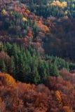 Creaciones del otoño Imagen de archivo libre de regalías