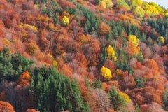 Creaciones del otoño Fotografía de archivo libre de regalías